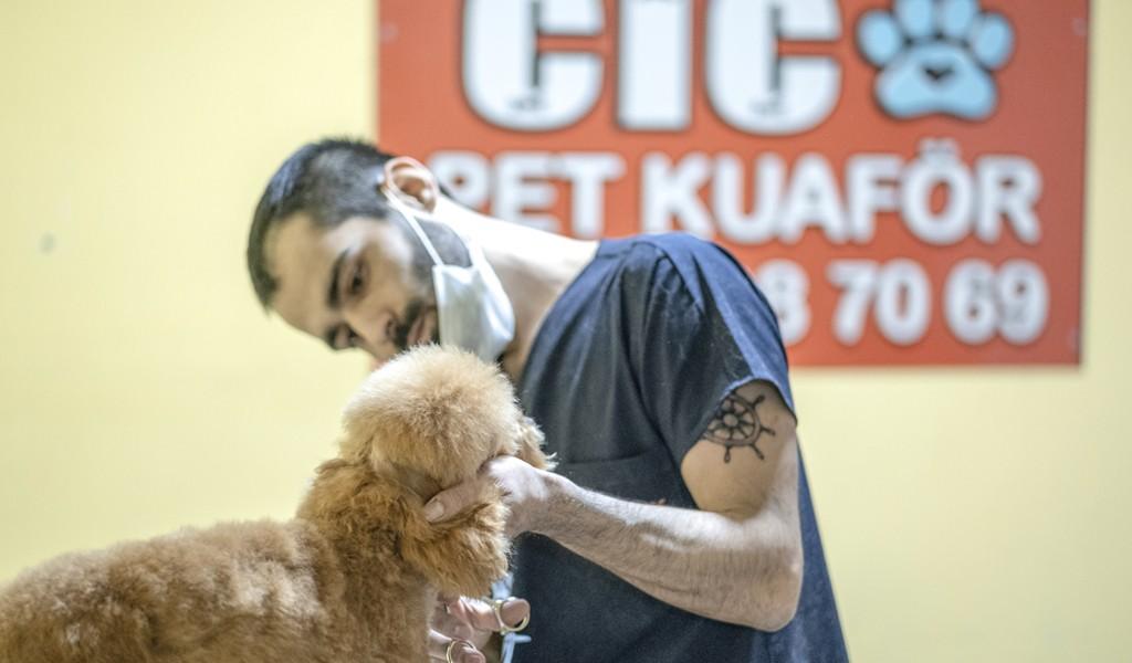 Anestezi yok, sevgi var! Çiço Kedi Köpek Kuaförü