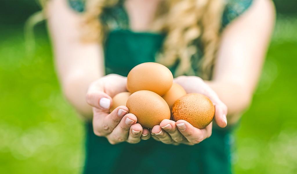 Turuncu, Sağlıktır! Ege'den komşunuz Turuncu Yumurta, artık Kocaeli' ye de taze yumurta getirecek!